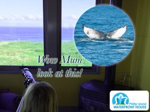 Phillip-Island-Waterfront-House-Whales
